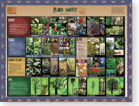 image of prairie harvest plant poster